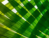 Palm leaf. Tropical plants. Nature green background.