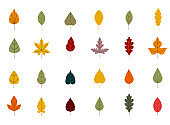 Collection beautiful colorful autumn leaves isolated on white background. Simple cartoon flat style. Autumn leaves of maple, oak, birch. Floral design element.