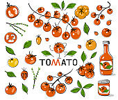 Red tomatoes. Hand drawn tomatoes with black outline. Set with hand drawn colorful doodle vegetables. Sketch style vector collection.