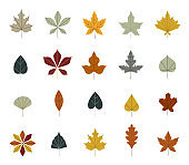 Set of colorful autumn leaves. Simple cartoon flat style. vector illustration. Maple and oak leaves, branches. Botanical forest plants or september october tree foliage.