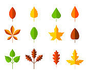 Colorful autumn leaves set. Cartoon leaf in flat style. Autumn herbarium. Collection of hand drawn fallen leaves. Set of cartoon elements of autumn.