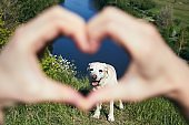 Hands of pet owner making heart shape against dog