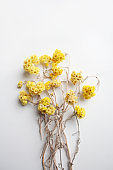 Dried yellow flowers bouquet