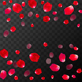 Abstract background with flying red rose petals on a black transparent background. Vector illustration. EPS 10.