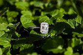 Engagement ring on a leaf. Natural light.