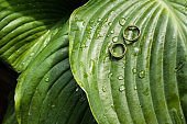 wedding rings lie on a green leaf with raindrops