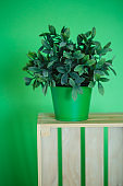 Decorative interior plant for a green room