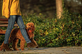 Female dog walker with a dog in a park