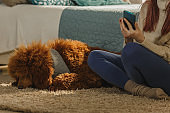 Dog sleeping next to his owner while she is using her phone