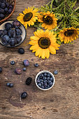 Berries, plums, grapes and sunflowers