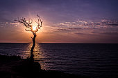 Sunset sea cliff silhouette of dry tree.