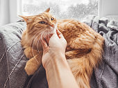 Woman strokes cute ginger cat lying on blanket on window sill. Fluffy pet purrs with pleasure. Snowy weather outside. Cozy home.