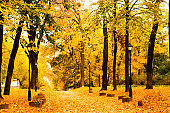Park alley with yellow leaves. Autumn city decor or autumn mood.