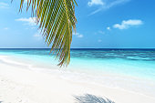 Exotic beach with palm leaves and turquoise sea