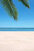 Tropical sand beach and palm leaves with clear sky background