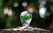 Grow green trees on money in soft light energy saving bulbs with the idea of economic growth and world environment day.