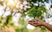 Trees are planted on coins in human hands with blurred natural backgrounds, plant growth ideas and environmentally friendly investments.