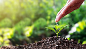 Women use hands to pour water, growing saplings on soil, and plant growth ideas and text space.