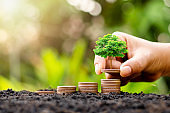 Growing a small tree with money, including money that grows on the ground in a lush environment, ideas for investment success and financial growth.