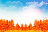 Trees with bright colorful leaves