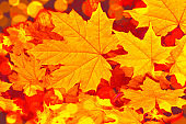 Falling leaves natural background