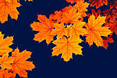autumn bright colorful leaves