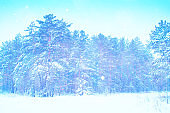 snow covered trees. outdoor