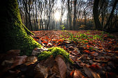 Morning view in an autumn forest with sunburst and foggy rays