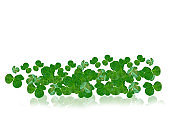 flowers isolated on white background. Green clover leaves. St.Patrick 's Day