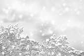 snow covered trees. greeting card