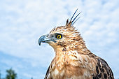 Portrait of eagle with big eyes and sharp beak majestic show of the world's biggest birds