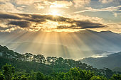 Sunrise over hillside a pine forest with long sun rays pass through valley