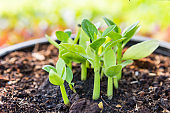 Healthy young green plant growing in good soil over blurred green garden background