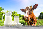 Dairy products on wooden table against background of cow and pasture