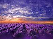 Beautiful Tranquil Nature Background.Amazing Lavender Flowers.Art Design.Creative Photography.Conceptual Photo.Fantasy Floral Art.Artistic Wallpaper.Violet Color.Blooming Lavender Field at Sunset.Blue Sky,Clouds.Orange Color.Unique Summer Landscape.Sun.