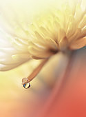 Beautiful Nature Background.Floral Art Design.Abstract Macro Photography.Daisy Flower.Pastel Chrysanthemum Flowers.Yellow Background.Creative Artistic Wallpaper.Wedding Invitation.Celebration,love.Close up View.Happy Holidays.Golden Color.Copy Space.Water