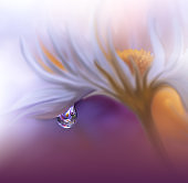 Beautiful Nature Background.Macro Shot of Amazing Spring Daisy Flower.Art Design.Close up Photography.Conceptual Abstract Photo.Fantasy Floral Art.Creative Artistic Wallpaper.Violet Color.White Daisy.Colorful,colors,plant.Water drop.Romantic,love.Orange.