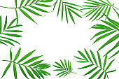 frame of green leaves of palm tree isolated on white background with clipping path