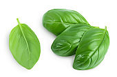 Fresh basil leaf isolated on white background with clipping path and full depth of field. Top view. Flat lay