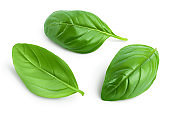 Fresh basil leaf isolated on white background with clipping path and full depth of field
