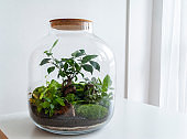 Beautiful jar with live forest with self ecosystem, terrarium, forest in a jar