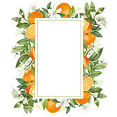 Vertical frame of hand drawn blooming orange tree branches, flowers, oranges on white background