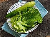 Korean fresh organic vegetable lettuce and cucumber