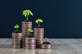 Many coins are stacked in a graph shape with growing tree for financial planning concepts.