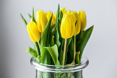 A bouquet of yellow Tulips in a glass vase on a gray background. Side view. Copy space