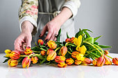 The concept of the florist's work. A girl makes a bouquet of yellow, orange and red Tulips. White background