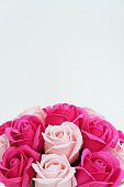 Buds of pink and white roses on a white background.
