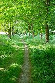Path Running Through Beautiful Green Summer Woodland