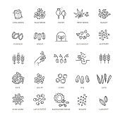 Plant seed vector icon set