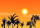 Hot sunset evening and silhouettes palm trees. Beach tropical on background bright orange setting sun.